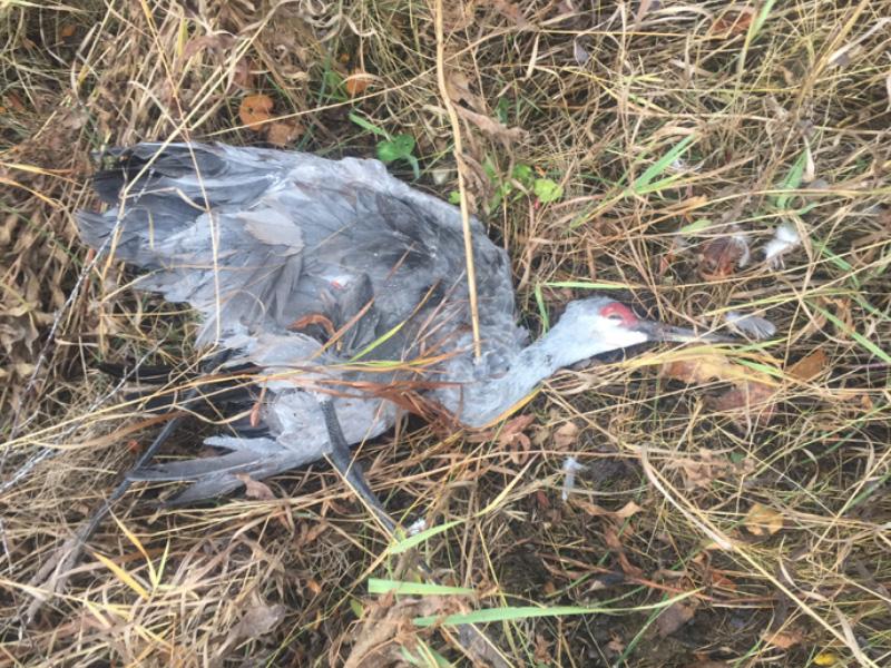 Migratory Birds Left to Waste Near Meadow Lake