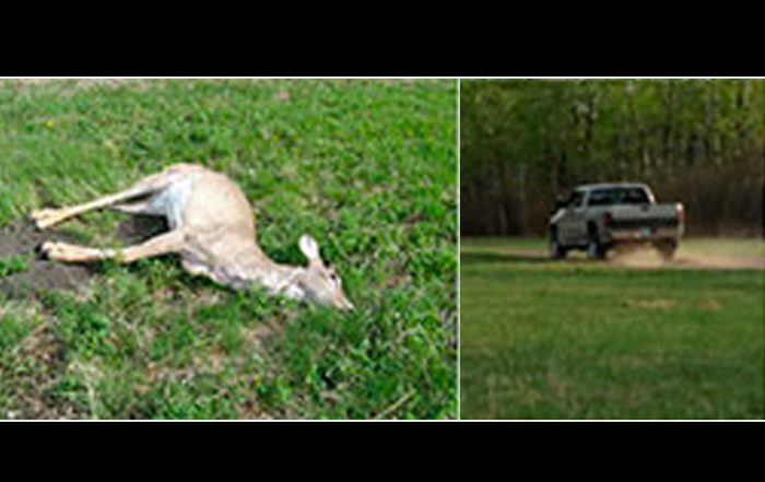 White-Tailed Deer Shot Near Weldon