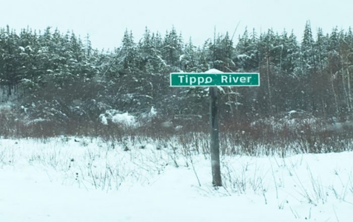 Moose Shot from Vehicle Near Tippo River