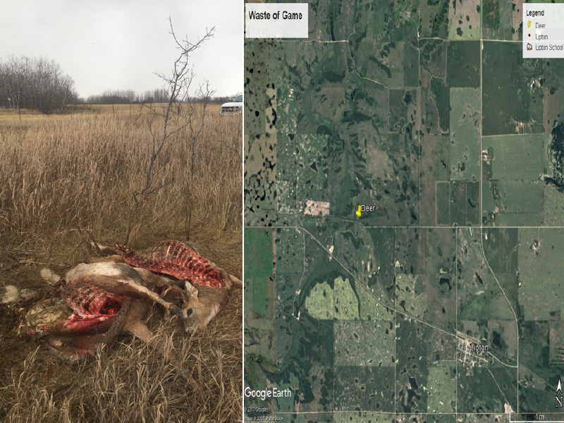 Three White-Tailed Deer Shot and Left to Waste Near Lipton
