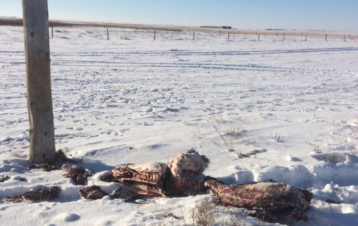 White-Tailed Deer Carcasses Dumped Near Kincaid