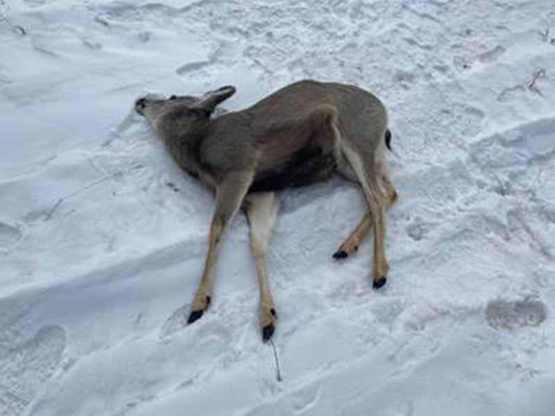 Multiple Deer Shot near Leroy